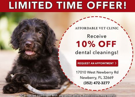 Affordable Vet Clinic Dental Cleanings Special Ad