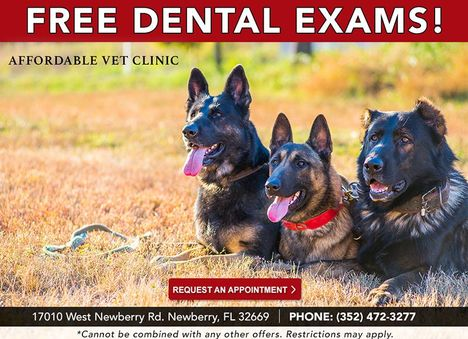 Affordable Vet Clinic Free Dental Exams Ad