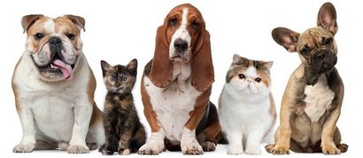Cats and dogs posing against white background