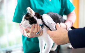 Cat being scanned for pet microchip