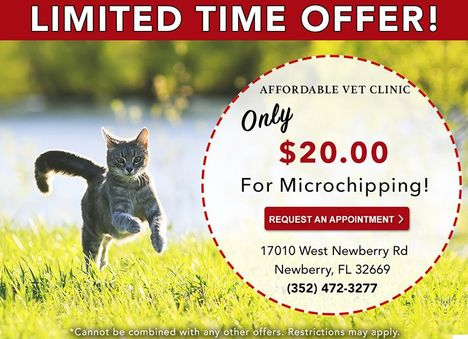 Affordable Vet Clinic Microchipping Special Ad